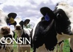Wisconsin cows in the pasture