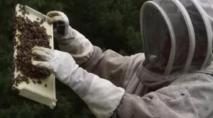 UWRF_bees_video