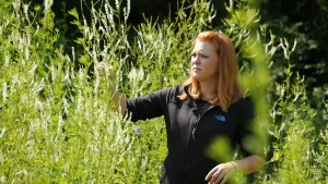UW-Eau Claire biology major Allison Ban-Herr helped locate and identify invasive plant species as an intern with Beaver Creek Reserve in rural Fall Creek.