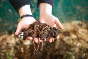 Tens of thousands of worms are used in the vermicomposting system to turn food waste into valuable fertilizer.