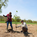 UW-La Crosse Professor Meredith Thomsen plants a tree in an open field with help from a graduate student