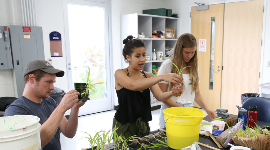 Photo of UW-Stout biology instructor Arthur Kneeland, left, working with LAKES REU students Elise Martinez, center, and Sarah Mack in a university lab. They are growing corn and other plants in sediment taken from a local waterway.
