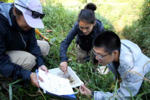 Photo of LAKES REU students, from left Elizabeth Sosa, Stephanie Gonzalez and Jimmy Chin, identify organisms in the north branch of Wilson Creek near Knapp.