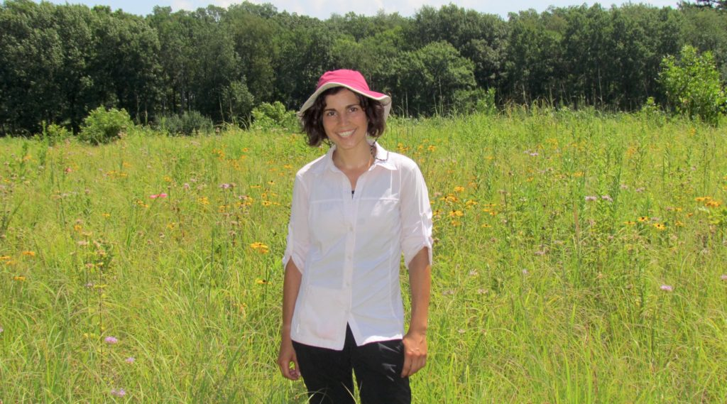 Photo of UW-Madison graduate student Carly Ziter conducting field work in a restored urban prairie in Turville Point Conservation Park in Madison. Photo by Eric Pedersen
