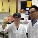 Photo of graduate student Emily Lehmann and Assistant Professor Taejo Kim, who are researching whether some natural cheeses have greater antimicrobial properties against food-borne pathogens like listeria when stored at room temperature.