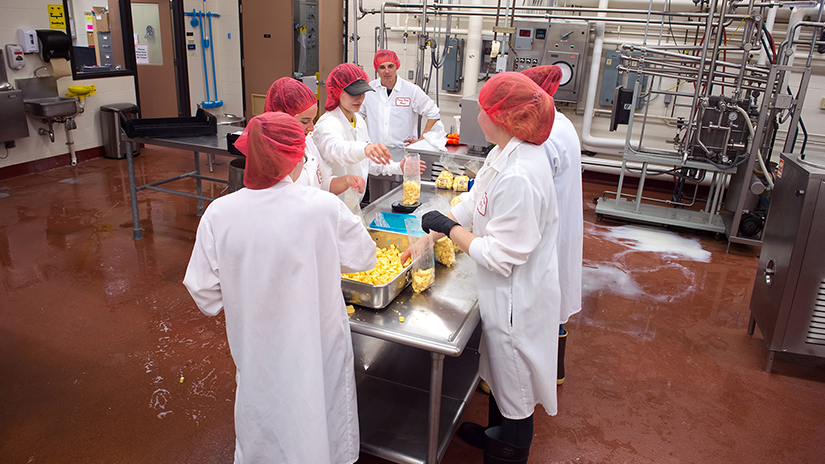 Photo of students packaging freshly made cheese curds in the UWRF Dairy Pilot Plant in 2018.