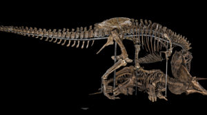 Photo of a T. rex dinosaur skeleton