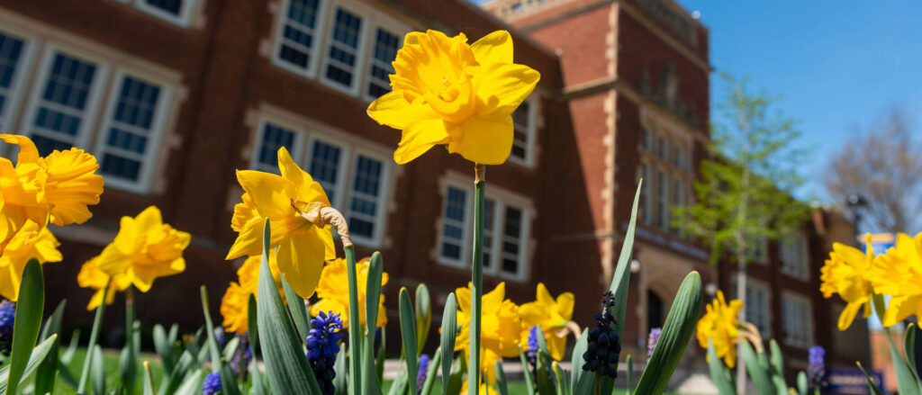 Photo of spring flowers on lower campus of UW-Eau Claire near Schofield Hall.