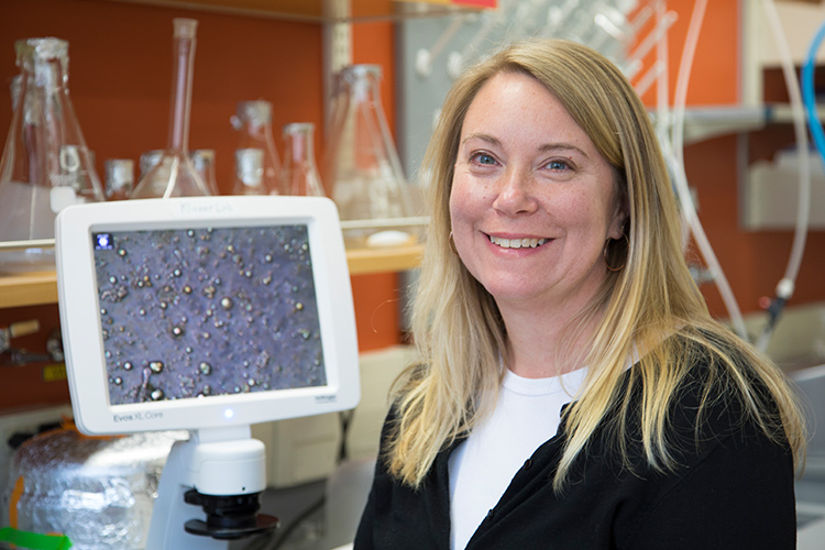 Photo of Rebecca Klaper, an aquatic toxicologist at UW-Milwaukee's School of Freshwater Sciences, is looking for ways to change the chemistry of nanoparticles in order to reduce their harm to aquatic creatures. (UWM Photo/Pete Amland)