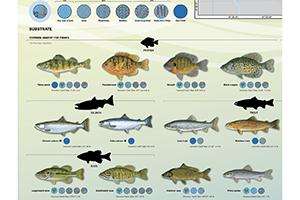 Image of harbor fish