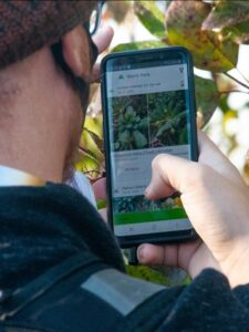 Photo of a student using his smartphone to help with plant identification.