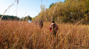Photo of UW-Stout environmental science students walking through a prairie at Menomin Park near Lake Menomin while doing plant research.