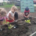 Photo of UCLCC children having hands on experiences with all aspects of the planting and upkeep of the garden. They also harvest and prepare food for snack times.