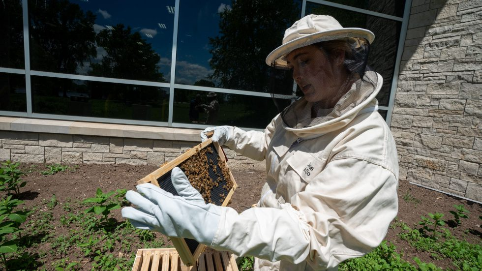 Photo of UW Oshkosh student Mariah Parkin with colonies of honey bees, valued pollinators that are now thriving behind the University of Wisconsin Oshkosh, enhancing the university's sustainability efforts.