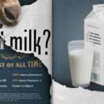 Photo of Daniel Nesja's GOAT Milk? advertising campaign, which took a silver in the American Advertising Awards. / Contributed photo