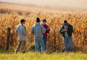 students in a corn field