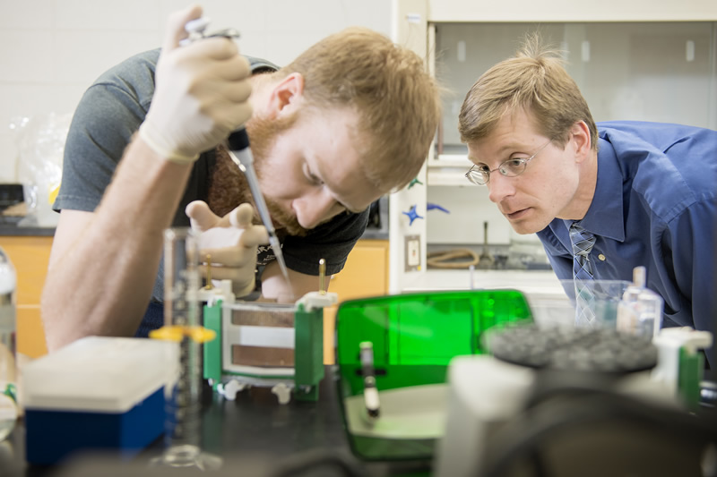Gavin Sunde and Dr. Derek Gingerich extract plant proteins to analyze response to red wavelength light.