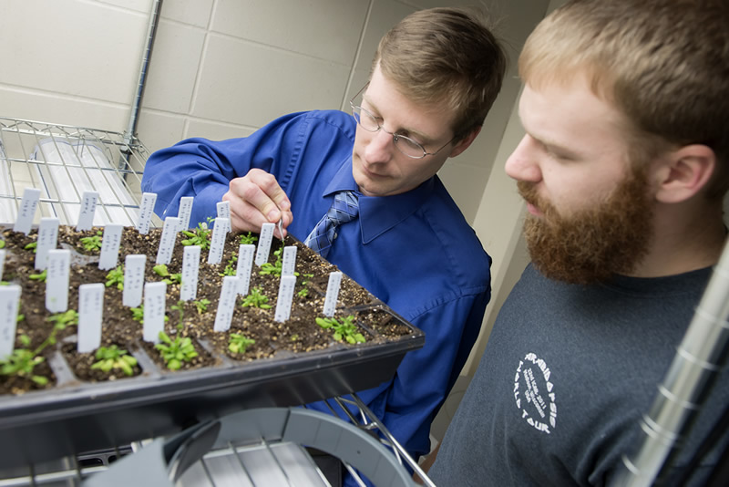 scientists working on NSF funded plant light response research