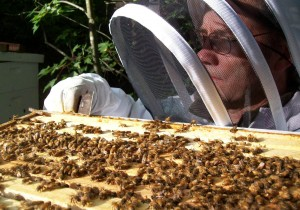 Jim Burritt tends to his bees in rural Dunn County