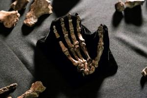 Bones from Homo naledi discovery