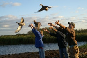 UW-Stevens Point students release banded ducks at Mead Wildlife Refuge.