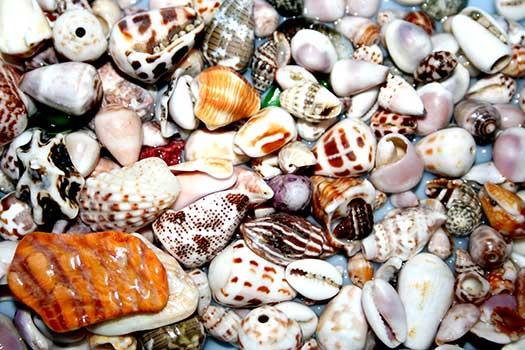 diverse-shells